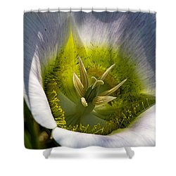 Mariposa Lily Shower Curtain by Alana Thrower