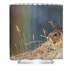 Marmot And Rainbow Shower Curtain