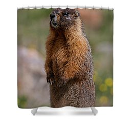 Shower Curtain featuring the photograph Marmot by Gary Lengyel