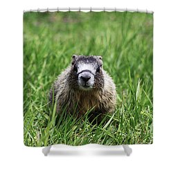 Marmot Pup Shower Curtain