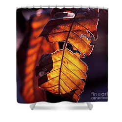 Shower Curtain featuring the photograph Maron by Tatsuya Atarashi