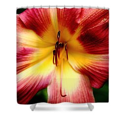 Maroon Day Lily Shower Curtain