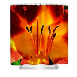 Maroon Lily Shower Curtain