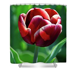 Maroon Tulip Shower Curtain