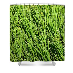 Marsh Grasses Shower Curtain