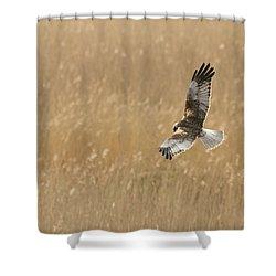 Marsh Harrier Shower Curtain