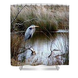 Marsh Pond Great Blue Heron Shower Curtain by Phyllis Beiser