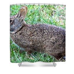 Shower Curtain featuring the photograph Marsh Rabbit Run Rabbit  by Chris Mercer