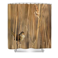 Marsh Wren Square Shower Curtain