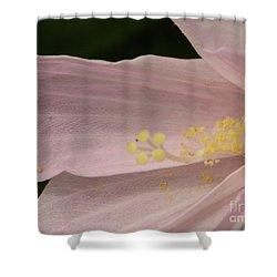 Marshmallow Shower Curtain by Priscilla Richardson