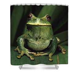 Marsupial Frog Gastrotheca Orophylax Shower Curtain by Pete Oxford