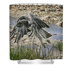 Martial Eagle Shower Curtain by Gary Hall