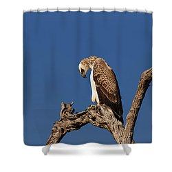 Martial Eagle Shower Curtain