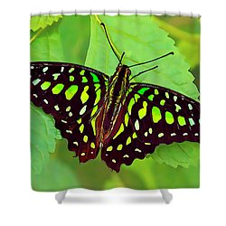 Marvelous Malachite Butterfly 2 Shower Curtain