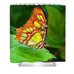 Marvelous Malachite Butterfly Shower Curtain