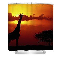 Masai Giraffe Giraffa Camelopardalis Shower Curtain by Gerry Ellis