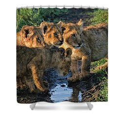 Shower Curtain featuring the photograph Masai Mara Lion Cubs by Karen Lewis