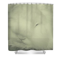 Mashy Potato Shower Curtain