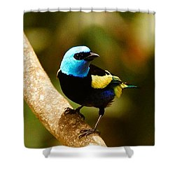 Shower Curtain featuring the photograph Masked Bandit by Blair Wainman