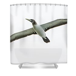 Shower Curtain featuring the photograph Masked Booby 02 by Werner Padarin