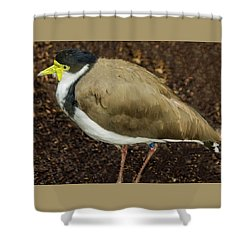 Masked Lapwing 2 Shower Curtain