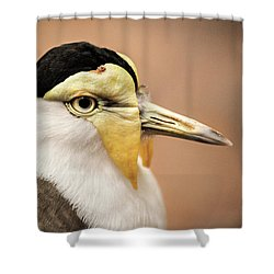 Masked Lapwing Shower Curtain by Don Johnson