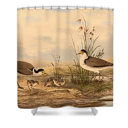 Masked Lapwing Shower Curtain