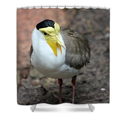 Masked Plover Pose Shower Curtain