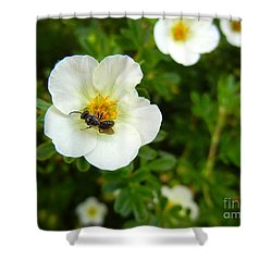 Massachusetts Carpenter Bee Shower Curtain