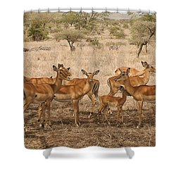 Master Of His Domain Shower Curtain by Gary Hall