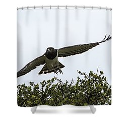 Shower Curtain featuring the photograph Master Of The Sky by Ramabhadran Thirupattur