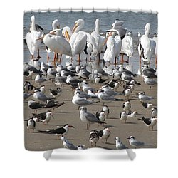 Shower Curtain featuring the photograph Matagorda Beach Sea Birds by Jimmie Bartlett
