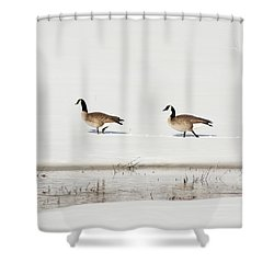 Shower Curtain featuring the photograph Mating Canadian Geese by Daniel Hebard