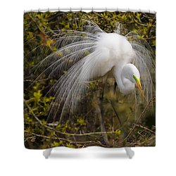 Shower Curtain featuring the photograph Mating Egret by Kelly Marquardt