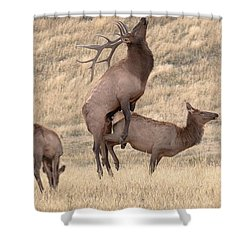 Shower Curtain featuring the photograph Mating  by Kelly Marquardt