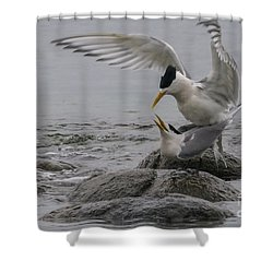 Mating Pair 2 Shower Curtain