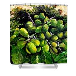 Matoa Fruit Shower Curtain