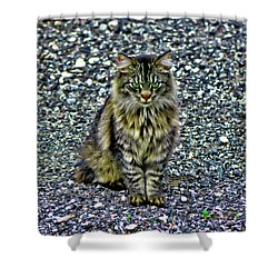 Mattie The Main Coon Cat Shower Curtain