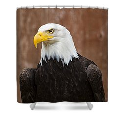 Mature Adult Bald Eagle Shower Curtain