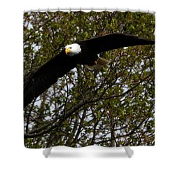 Mature Bald Eagle Shower Curtain