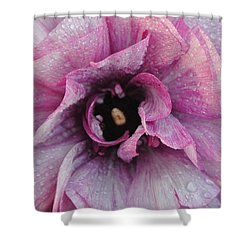 Shower Curtain featuring the photograph Mauve Beauty by Tamara Bettencourt
