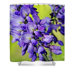 Mauve Wisteria Shower Curtain by Kaye Menner
