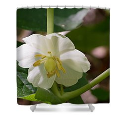 May-apple Blossom Shower Curtain