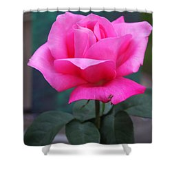Shower Curtain featuring the photograph May Beauty by Vadim Levin