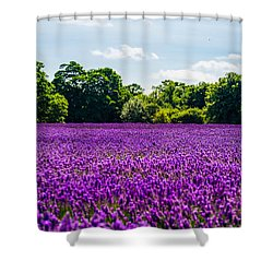 Mayfield Lavender Shower Curtain