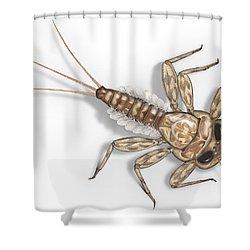 Mayfly Larva Nymph Rithorgena Ecdyonurus Venosus - Moscas De May Shower Curtain