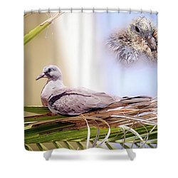 Me All Grown Up 01 Shower Curtain by Kevin Chippindall
