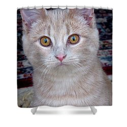 Me- No, It Was The Dog Shower Curtain