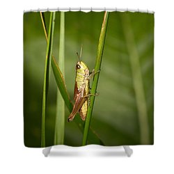 Shower Curtain featuring the photograph Meadow Grasshopper by Jouko Lehto