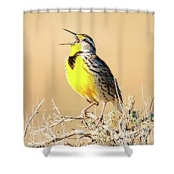 Meadow Lark Shower Curtain